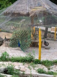 This is the Peacock sanctuarary in the Sabo Park in the main tourist area of Daqingshan. It is also the end of the Yongcuixia Hike, returning to the Taiji school.