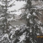 Snow - 05
