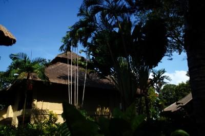 巴厘岛20191120晨- - 1