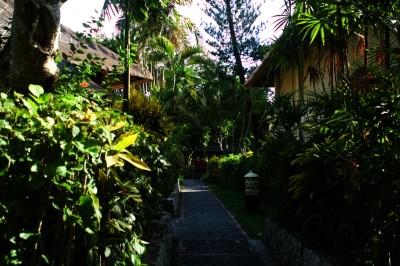 巴厘岛20191120晨- - 5