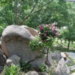 阴阳石|Yin Yang Rock 2