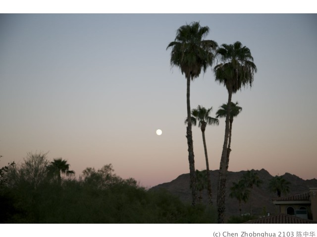 Phoenix - 07